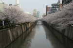 Canal at Naka-Meguro lined with cherry trees