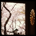 Cherry trees through the shrine doors at Yasakuni Jinja