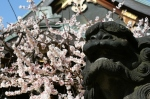 Yushima Tenjin statues and blossoms