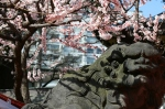 Yushima tenjin blossoms and statue